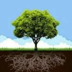Organisasi itu Ibarat Pohon