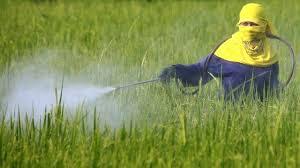Paparan Pestisida berisiko tingkatkan Kanker Hati