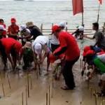 Vegetasi Mangrove Mampu kurangi Terjangan Tsunami