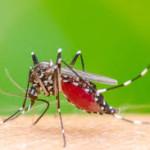 Ciri2 Nyamuk Penyebar Penyakit di sekitar Rumah