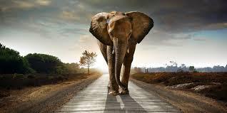 Tol Trans Sumatra Menyiapkan Perlintasan Gajah