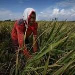 Pertanian Dituding Ancam Keberagaman Tumbuhan Dan Hewan