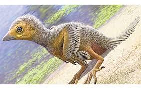 Ditemukan Fosil Anak Burung Terkecil