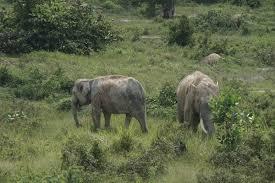 Pelintas Jalan Tol Pekanbaru Dumai Bonus Pemandangan Gajah
