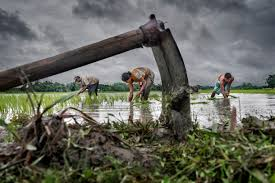Petani Membagikan Bibit Unggul