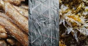 kantong plastik terbuat dari rumput laut