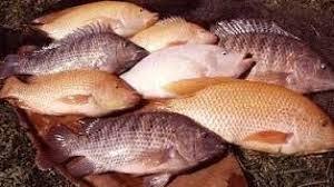 manfaat ikan air tawar