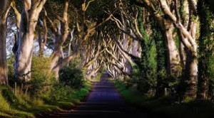pemandangan jalan indah The Dark Hedges-Irlandia