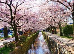 pemandangan jalan indah The Philosophers Walk-Jepang