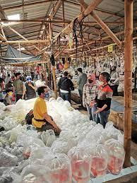 Pedagang Ikan Hias Di Bogor Meraup Cuan Go Digital