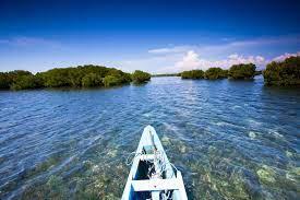 Mangrove Cegah Tsunami Dan Abrasi Pantai