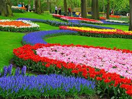 3-Taman Bunga Keukenhof